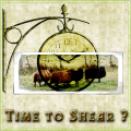 Time to shear