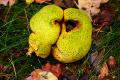 Groene paddenstoel