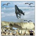 Horse on the beach ..