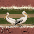 Love is in the aire