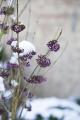 Kleur in de winter