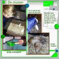 lo 2 - Muizen