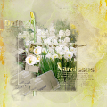 Narcissus Mary Poppins