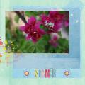 Summer DC