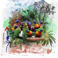 Fred's Birds