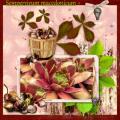 Nov. 2018 - Sempervivum macedonicum