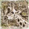 Ik houd van Girafen