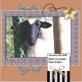Oct.2019S -Sheep ...Peek-a-boo ...
