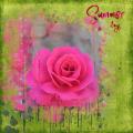 rose , mask June HSA