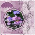 april 2020 - regen druipt op mijn viooltjes
