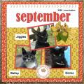 de 1e is Sept.2020 - onze katten