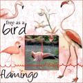 Juni 2021 Flamingo's , 2e lo