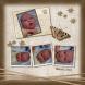 Babyboek Ryan blz...