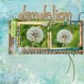dandelion (paardenbloem)