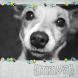 maya, hondje van men ouders