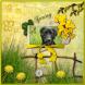 joya spring